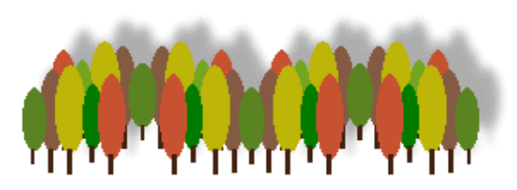 trees_forest